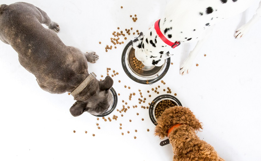 Uk Kit For Dogs Food Intolerances